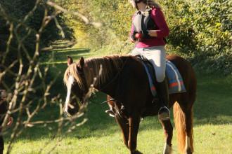 entspannte Pferde_6953522375_l