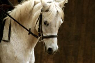 konzentrierte Pferde_4629617812_l