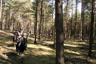 lustiges Wegesuchen im Wald_4628961935_l